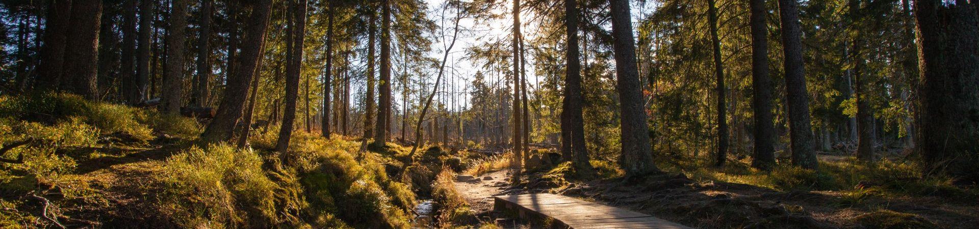 Wellnesshotels im Harz