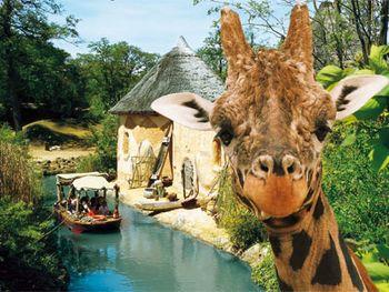 Eine Reise in die Welt der Tiere