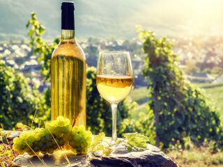 Weinwandern in Südtirol