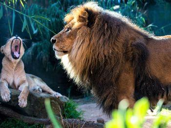 LOGINn & enjoy @ Zoo Leipzig! (2ÜN) inkl. Tagesticket