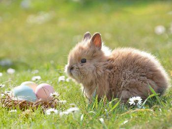 Ostern in Berlin - Hier tanzen die Hasen
