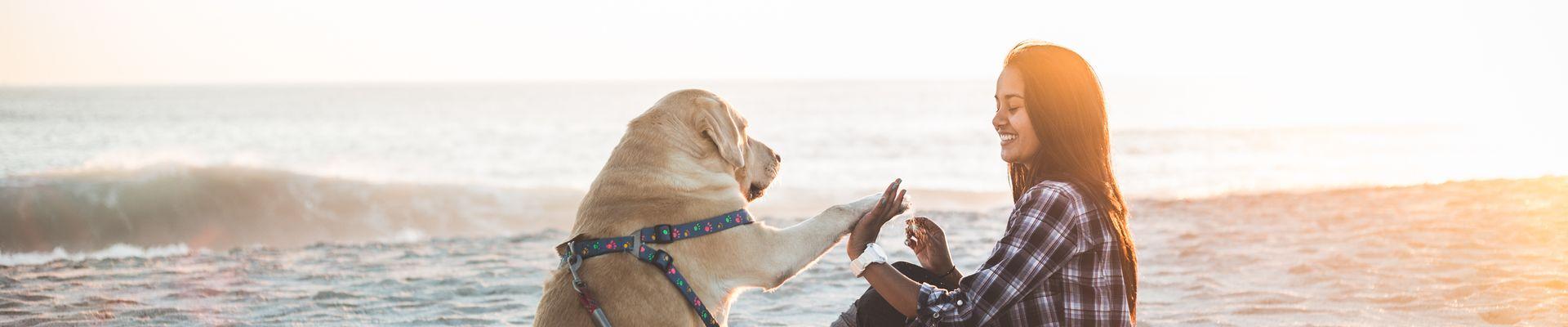 Wellness Wochenende mit Hund