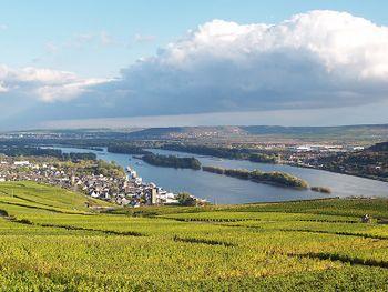 Frühling - Sommer und Herbst am Rhein
